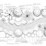 Town Garden In Newport Planting Plan