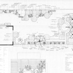 Contemporary Garden In Cowes Planting Plan